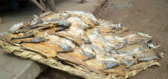 Economy Affected as Fish Production Declines in Busia County