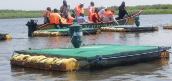 Fish Cages Introduced in Lake Victoria to Boost Blue Economy