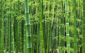 Bamboo Factory Worth 5 Billion Ksh to Hit Kenyan Market - Talk Africa
